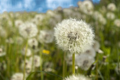 Klaar om zaden met de wind mee te beginnen. royalty-vrije stock foto's