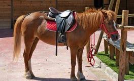 Klaar poney stock foto's