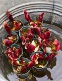 Klaar voor het planten Royalty-vrije Stock Foto