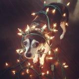 Klaar voor Kerstmis Stock Foto's