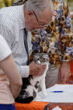 Klaas van der Wijk with Scottish fold cat Royalty Free Stock Image