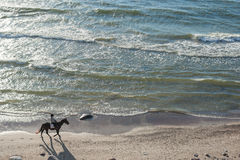 KLAIPEDA, LITHUANIA - SEPTEMBER 28, 2012: Woman is riding with horse on the beach of Baltic Sea Stock Photography