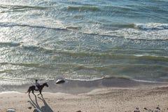 KLAIPEDA, LITUANIA - 28 DE SEPTIEMBRE DE 2012: La mujer está montando con el caballo en la playa del mar Báltico Fotografía de archivo