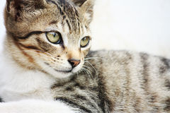 klampad kattgata royaltyfri bild