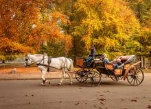 Klampenborg, Danemark - 15 octobre 2018 : Cheval blanc avec le cocher et le chariot conduisant quelques touristes dans la forêt d image stock