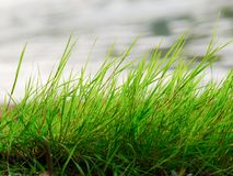 Klappend groen sappig gras Stock Afbeeldingen