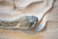 Klapperschlange Crotalusabschluß herauf Ansicht Lizenzfreies Stockbild