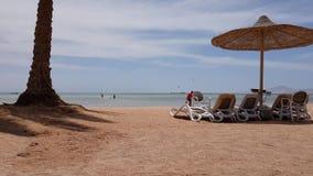 Klappstuhl durch das Meer nahe einer Palme stock video footage