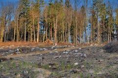 Klar bitande skog Royaltyfri Fotografi