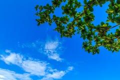 Klar blå sky med vita oklarheter molnfri sky Blå himmel med a Royaltyfri Bild