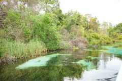 Klar flod Royaltyfri Foto