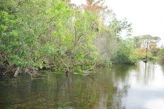 Klar flod Arkivfoto