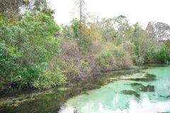 Klar flod Arkivfoton