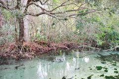 Klar flod Royaltyfria Bilder