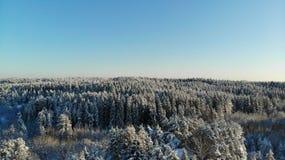 Klar frostig dag i skogträden som täckas med snö Sikt för öga för fågel` s Ryssland St Petersburg region royaltyfri fotografi