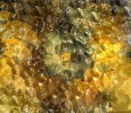 Klar glass tabelltextur Royaltyfria Foton