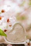 Klar hjärta för exponeringsglas i vår med blomningen Royaltyfria Bilder