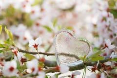 Klar hjärta för exponeringsglas i vår med blomningen Royaltyfri Fotografi