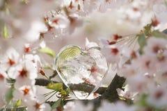 Klar hjärta för exponeringsglas i vår med blomningen Arkivfoto