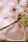 Klar hjärta för exponeringsglas i vår med blomningen Royaltyfri Bild