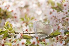 Klar hjärta för exponeringsglas i vår med blomningen Arkivfoton