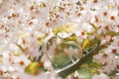 Klar hjärta för exponeringsglas i vår med blomningen Royaltyfri Foto