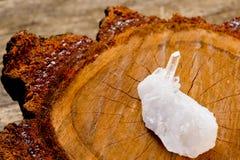 Klar kvartkristall för vit på tvärsnitt av den naturliga timmerjournalen Fotografering för Bildbyråer