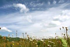 klara fina berg för blommagläntamorgon Royaltyfri Foto