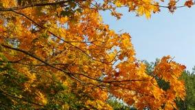 Klare Blätter Stockfotos