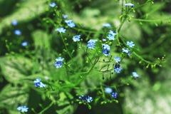 Klare blaue Blumen in der Unschärfeart für natürlichen Blumenhintergrund Lizenzfreie Stockfotografie