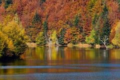 Klare Farben des Herbstes auf See Stockfotos