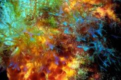 Klare Farben von Coral Reef lizenzfreies stockbild