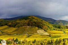 Klare Farben von Herbstweinbergen in Andlau, Elsass Lizenzfreie Stockbilder