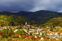 Klare Farben von Herbstweinbergen in Andlau, Elsass Stockbild