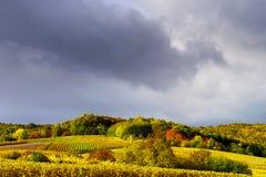 Klare Farben von Herbstweinbergen in Andlau, Elsass Stockfotografie