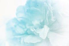 Klare Farbrose in der weichen Farbart auf Maulbeerpapierbeschaffenheit Lizenzfreies Stockbild