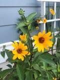 Klare gelbe und grüne Gartenblumen lizenzfreie stockfotografie