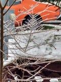 Klare Niederlassungen auf einem Wintermorgen Stockfotografie