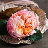 Klare rosafarbene Blumennahaufnahme eingewickelt in einer Zeitung Stockbilder