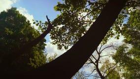Klare und des hellen Sonnenscheins Einstellung hinter Baumgrenze in der Wildnis HD Slowmo stock footage