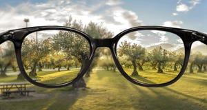 Klare Vision über Waldsonnenuntergang Lizenzfreies Stockfoto