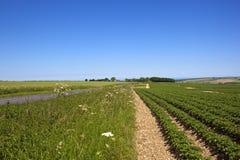 Klarer blauer Himmel über einer Yorkshire-Kartoffelernte Lizenzfreie Stockfotografie