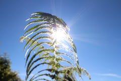Klarer blauer Himmel, Farnblatt, Sonnenlicht Stockfotografie
