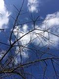 Klarer blauer Himmel im Winter Lizenzfreie Stockfotografie