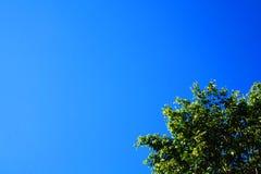 Klarer blauer Himmel mit einem Baum Lizenzfreies Stockbild