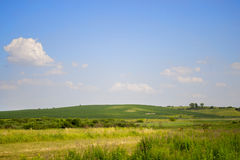 Klarer blauer Himmel mit kleinen weißen Wolken und grünes Feld im Sommer Stockbild