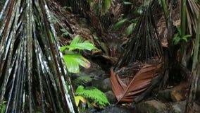 Klarer Fluss in Vallee De Mai Nature Reserve stock video