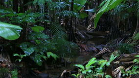Klarer Fluss in Vallee De Mai Nature Reserve stock footage