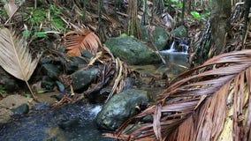 Klarer Fluss in Vallee De Mai Nature Reserve stock video footage