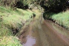Klarer Flussweg Lizenzfreie Stockbilder